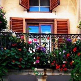 Какие цветы выращивать на балконе?